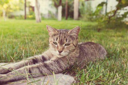 cat-PBT885P