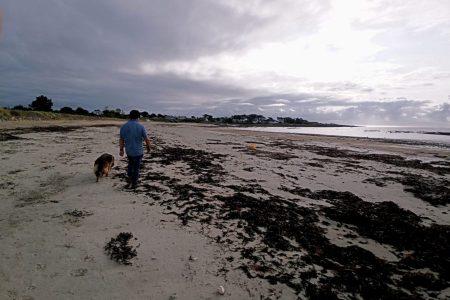 balade à la plage avec chien