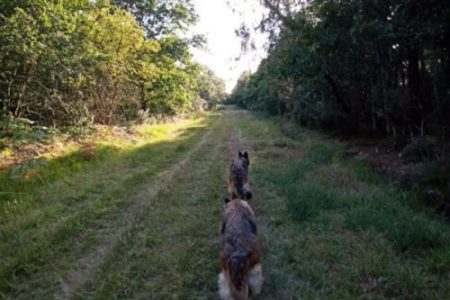 des chiens dans les bois autour des gîtes
