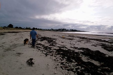 balade avec son chien sur la plage