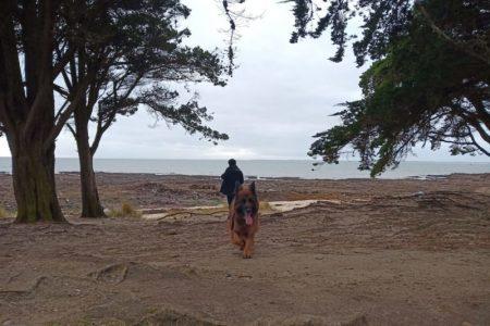 balade avec chien à la Trinité sur Mer
