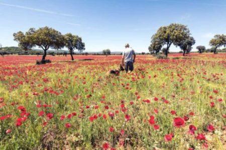 wanderlust-man-walking-dog-in-wild-meadow-PR9CDZN